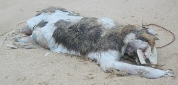 montauk_monster_gurneys_inn_july