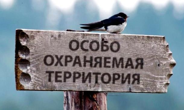 Экологический год в России