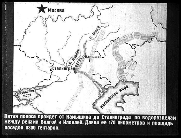 Проект лесополосы по берегам рек Волги и Иловли